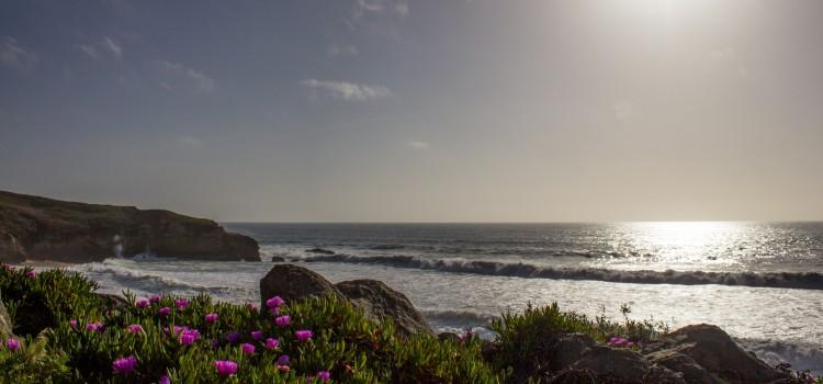 Sea Otter: Weg von San Francisco nach Monterey